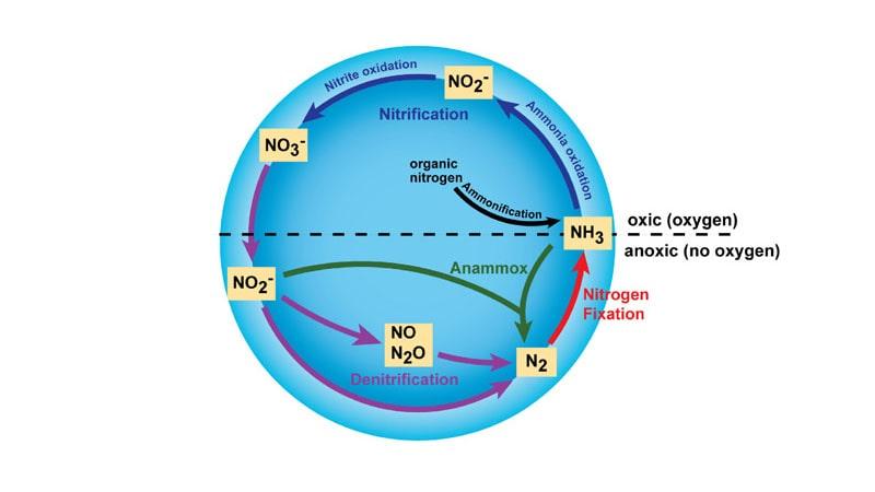 مهمترین کاربردهای نیتروژن در زمینه های مختلف